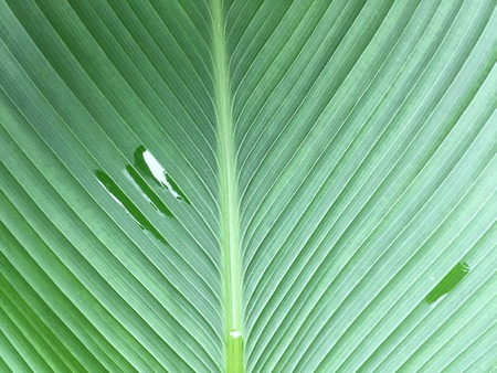 Palm leaves green texture spring