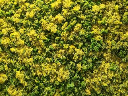 Green and Yellow moss background Фото со стока