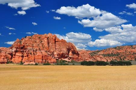 ザイオン国立公園付近の広大な麦畑