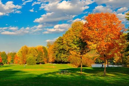 秋の紅葉とフィールド。 写真素材