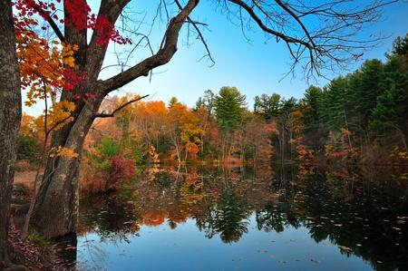pennsylvania: Peak Fall Foliage at Pine Grove Furnace State PArk, Pennsylvania Stock Photo