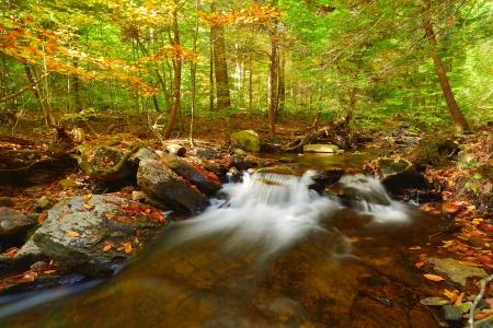 小さな水秋リケッツ グレン州立公園内