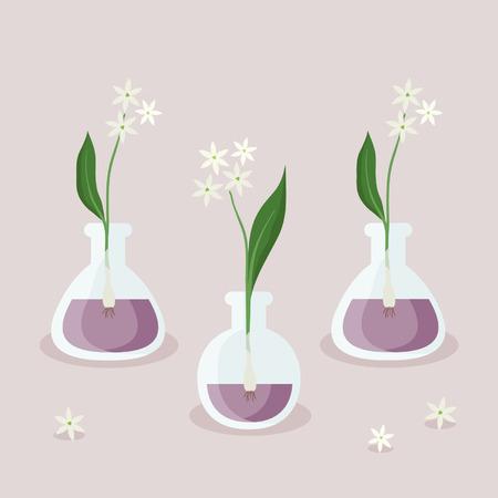 Blooming wild garlic - vector illustration
