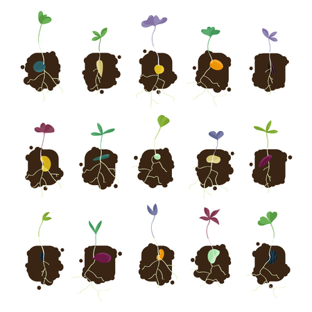 Set of growing seeds vector illustrations.
