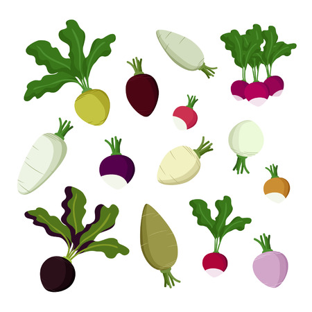 Set of radish, beet and turnip - vector illustration