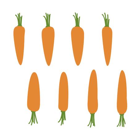 Carrot - vector illustration