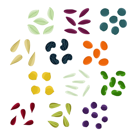 Set of various seeds - vector illustration Ilustração