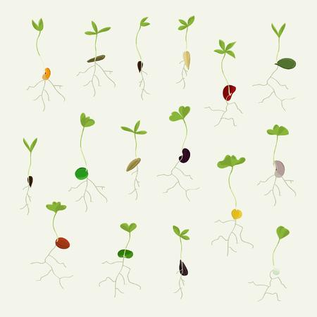 Set of growing seeds - vector illustration Ilustração