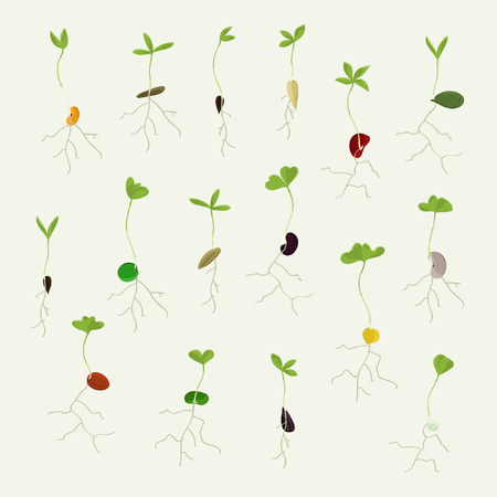 Set of growing seeds - vector illustration Illustration