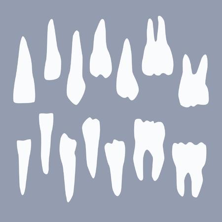 Set of human teeth vector illustration
