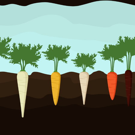 Growing carrot and parsnip - vector background Illustration