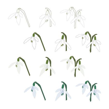 Set of snowdrop blossoms vector illustration.