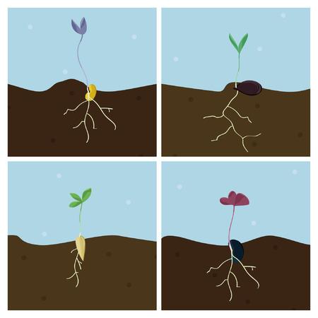 Groeiende zaden - vectorillustratie