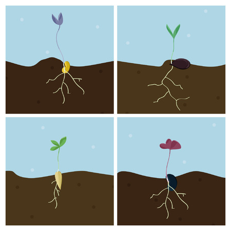 Growing seeds - vector illustration