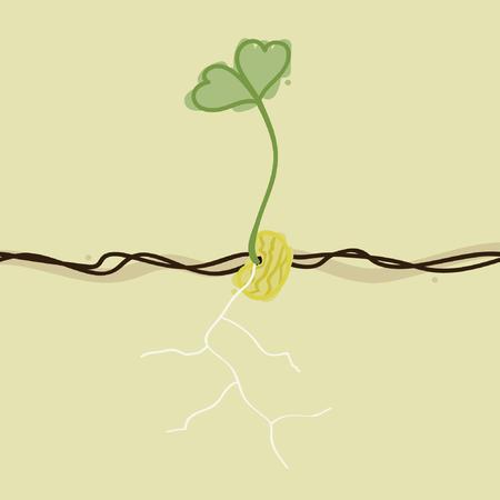 Groeiende gele boon - vectorillustratie