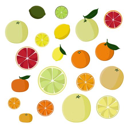 Set of citrus fruits - vector illustration