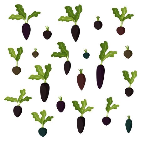 Set of dark beets and radishes - vector illustration