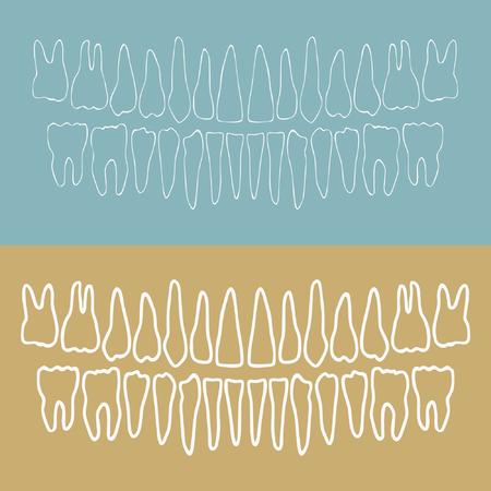 Outline human teeth vector illustration
