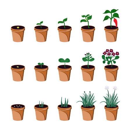Set of growing pepper pelargonium and chives in flowerpot Ilustração