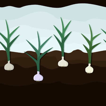 Growing garlic in the ground vector background.