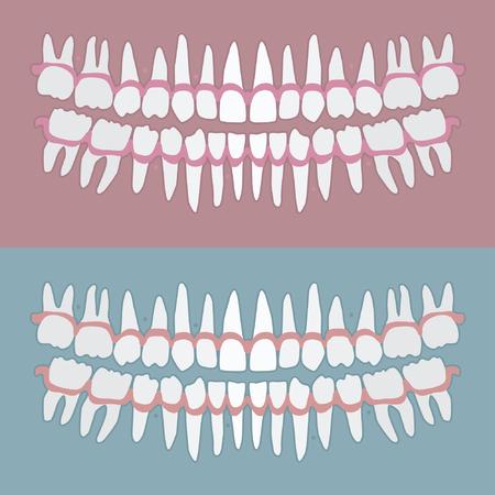 Set of adult human teeth - vector illustration Illustration