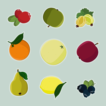Collection of fruits on colored background. Çizim
