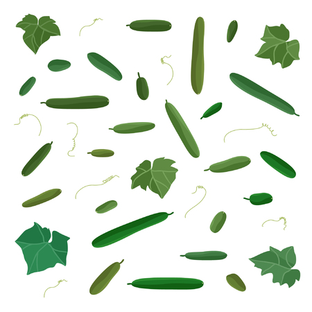 Various cucumbers set - vector illustration