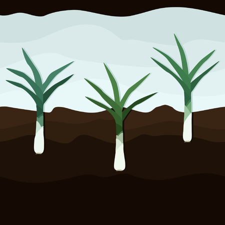 Leek growing in the ground - vector illustration