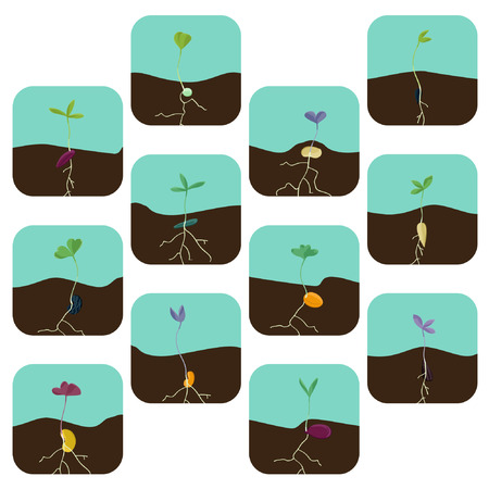 Various growing seeds - vector illustration