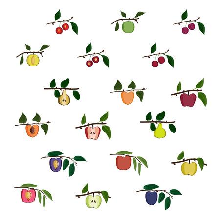 Set of growing tree fruit - vector illustration