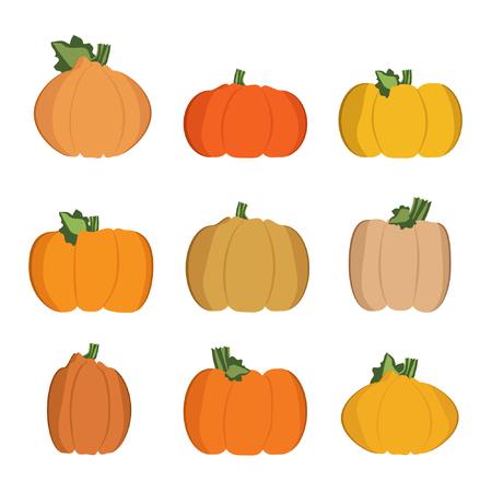 Set of various pumpkins - vector illustration