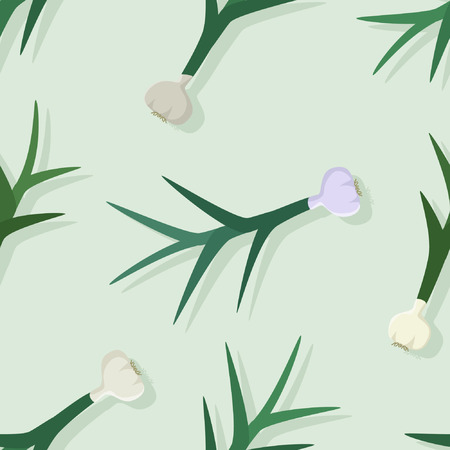 Garlic plant on light background -  vector background