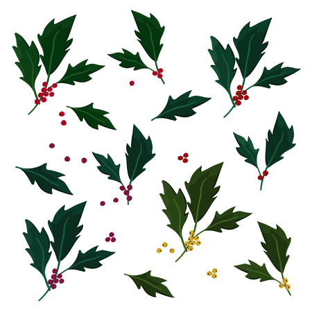 Set of holly tree twigs - vector illustration