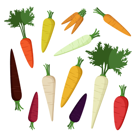 Set of root parsley, parsnip and carrot vector illustration