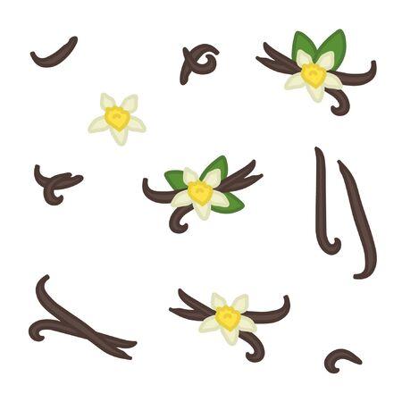 Vanilla bean and blossom set - vector illustration