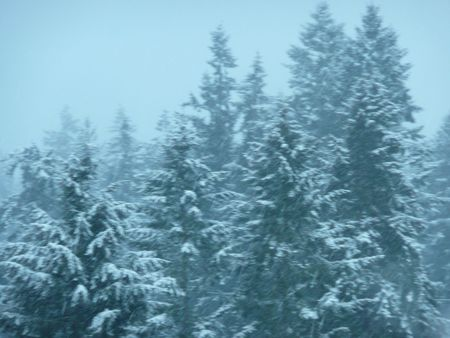 Fir Trees Across the Valley photo