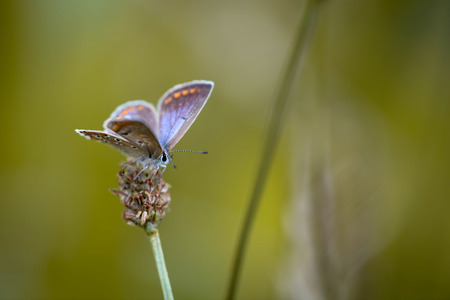 Butterfly hanging on grass seed