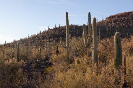 Saguaro Cactus, Mountain, scrb brush and blue sky