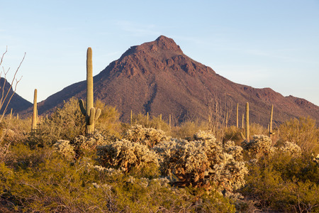 sonora: Saguaro Cactus, Palo Verde Trees, Blue Sky