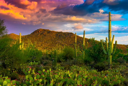 Saguaro Cactus, prickly pear cactus, mountains and clouds