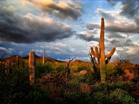 Saguaro Cactus among large fluffy dark monsoon Clouds