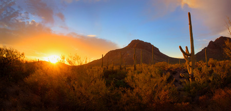 Saguaro Sunset and Mountain Panorama in the Sonoran Desert