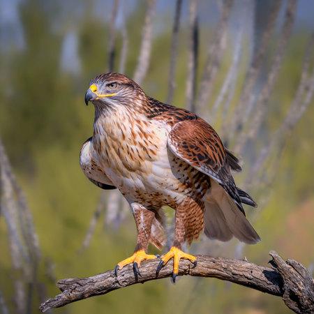 Halcón ferruginoso en rama en el desierto de Sonora Foto de archivo