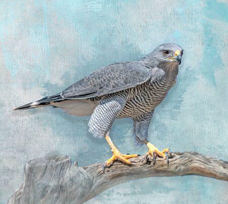 Grey Hawk Perched on Branch 免版税图像