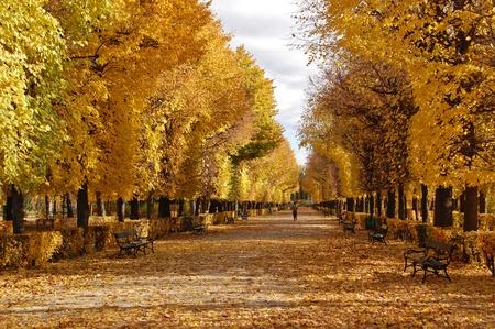 Golden autumn in Prater park, Vienna