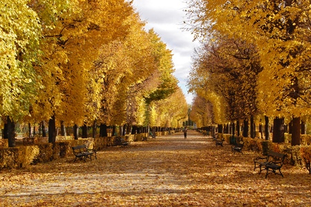 autumn in the park: Golden autumn in Prater park, Vienna