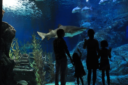aquarium: Family with two kids looking at shark in oceanarium Stock Photo