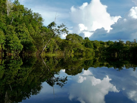 Reflections of Amazon river, Brazil Stock Photo