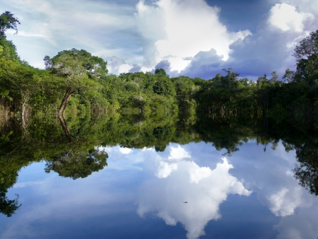tropical rainforest: Reflections of Amazon river, Brazil Stock Photo