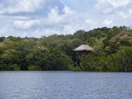 rio amazonas: Bungalow de madera, Amazonas, Brasil Foto de archivo